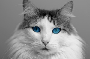 cat-817875_1280