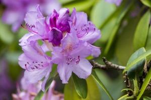 flower-810044_1280