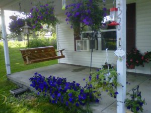 gorgeous flowers on my porch
